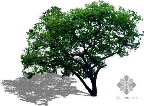 后期植物素材--大树