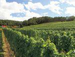 在拥有众多酿酒厂的北海道,品尝当地的葡萄酒