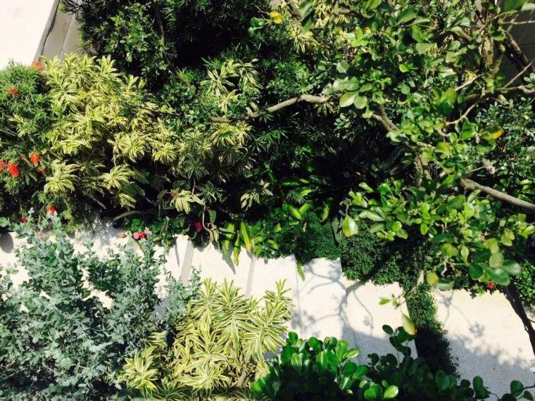 如何玩转植物造景之花镜_63