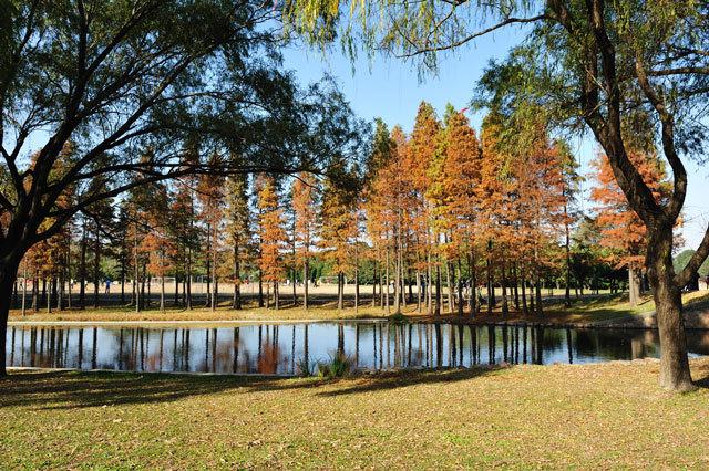 2-上海共青国家森林公园景观设计第2张图片