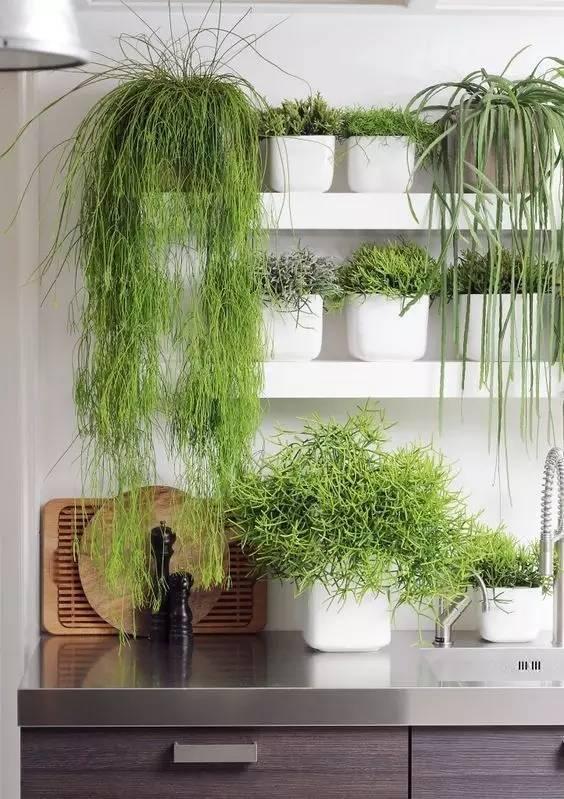 植物才是最美的隔断_9