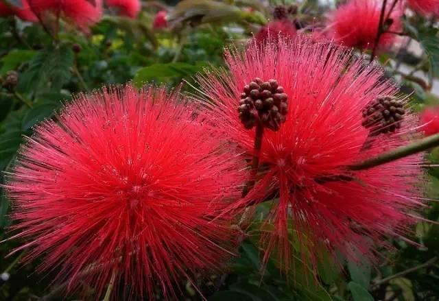 常见园林花卉植物开花月份对照一览表