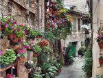 鲜花小镇——拥抱阳光、星空和童话