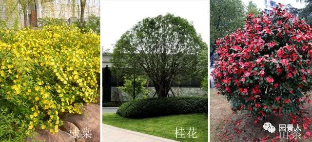 城市干道植物配置,实用干货不得不看!_31