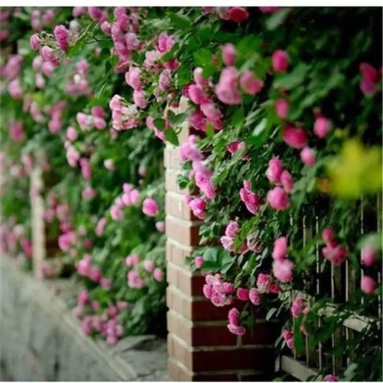 春天来了,这些庭院装饰植物美呆了!!
