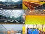 冷弯薄壁型钢体系案例《养殖场、仓库、厂房》