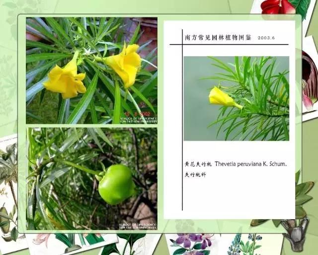 100种常见园林植物图鉴-20160523_183224_096.jpg