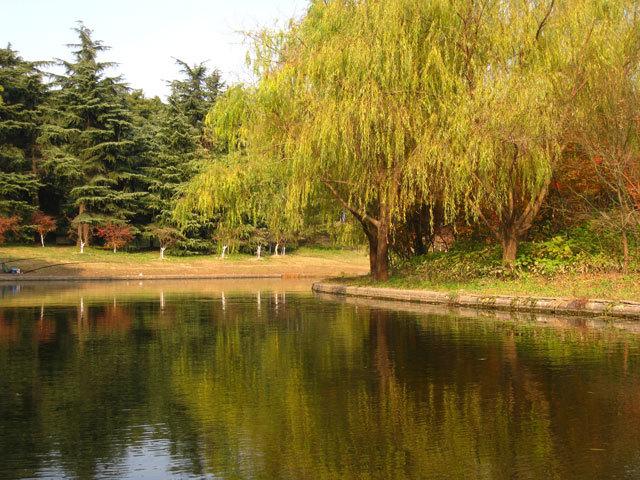 14-上海共青国家森林公园景观设计第14张图片