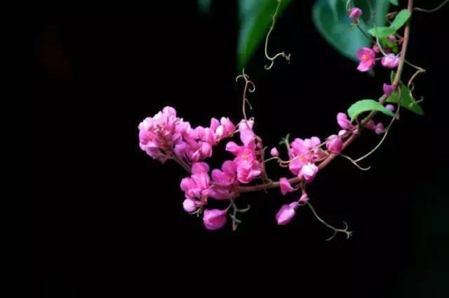 十八种藤本植物大集合~-048.jpg