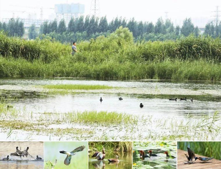 案例 渭柳湿地公园_17
