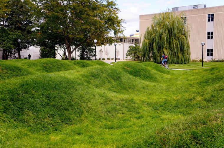 美国绿色波形草坪-2
