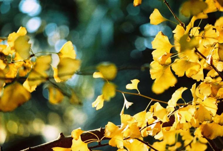 灵气之源·中式庭院主景树一览_20