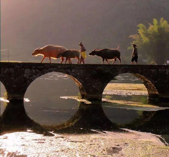 中国·古桥_33