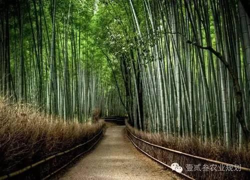 夏日竹韵——浅析竹子在景观设计中的应用_10