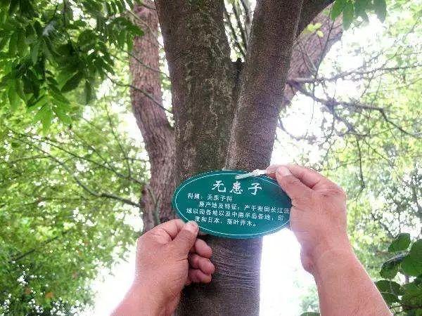 园林景观,到底是怎样的一个专业?_40