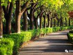 """苗木生产与造林绿化的""""乱象"""",是时候改变了"""