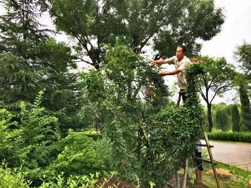 秋季苗木养护细则