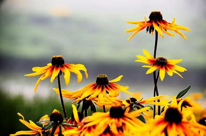 26种园林常用宿根花卉,你认识几种?