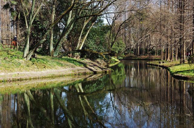 7-上海共青国家森林公园景观设计第7张图片