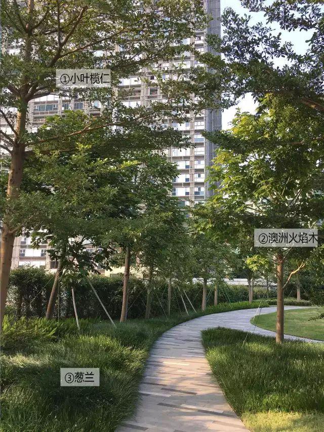 最详细图解:深圳湾三大豪宅景观植物配置!_27