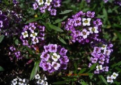 香花植物-嗅觉盛宴_28