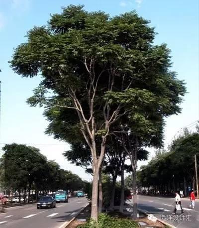 一个会种树的设计师,住宅每平方溢价3000元_10