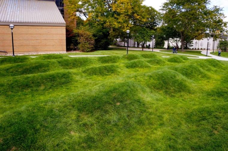 美国绿色波形草坪-5