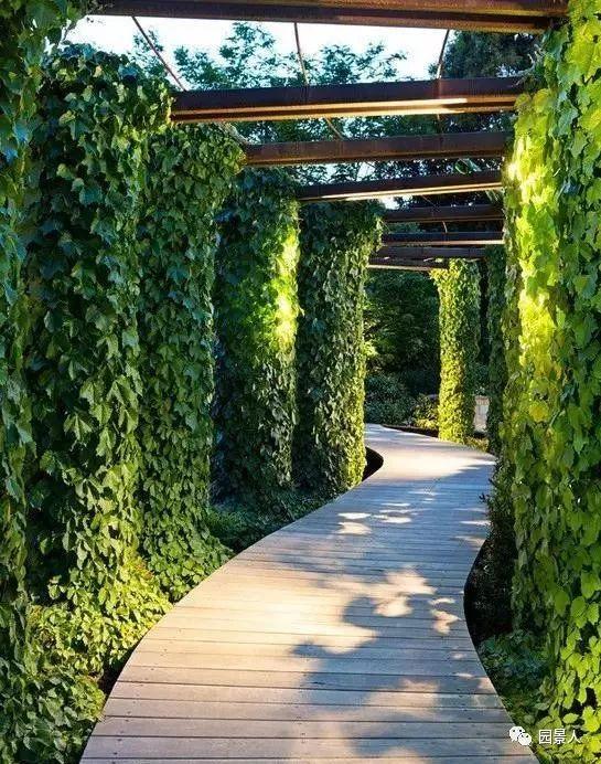 垂直绿化·会呼吸的墙壁_9