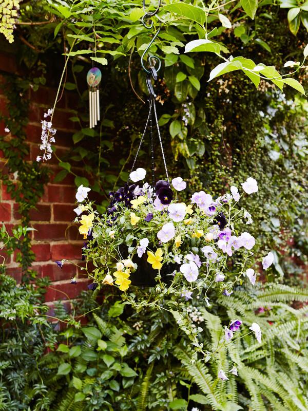 澳大利亚Fitzroy花园-2