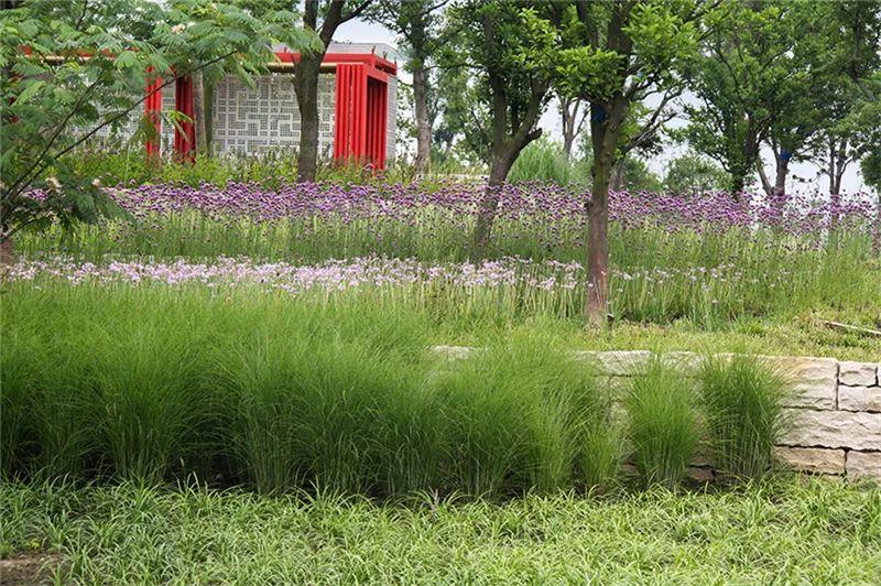 植物造景·实用景观设计来一波_27