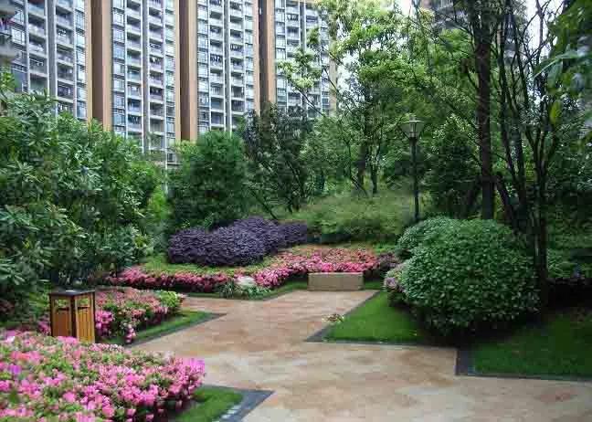 干货 景观地被植物的选择方式_14