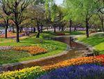 园林绿化对苗木的新要求