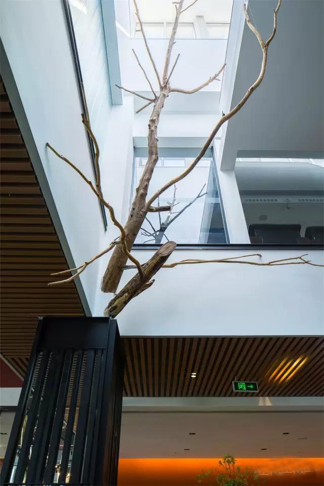 北京极富艺术感的树餐厅_5