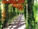 花架,通往浪漫的廊架