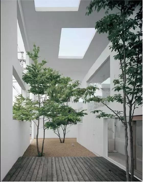 景观做得好丨给树让让路-640.webp (49).jpg
