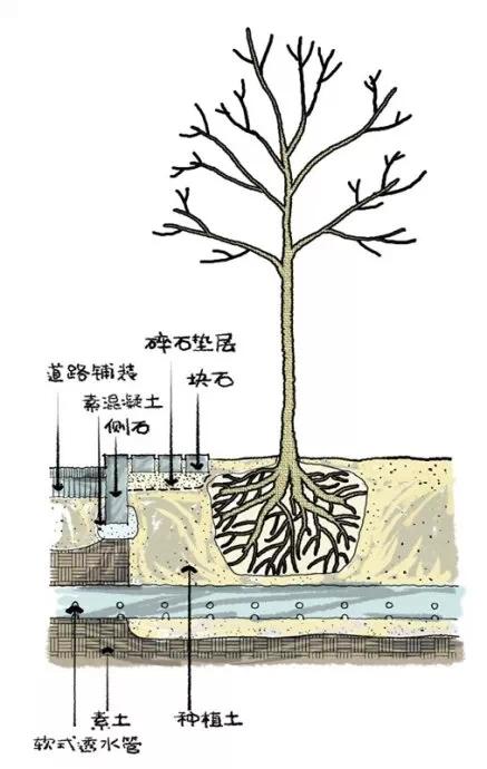 种植秘诀·图解园林景观之乔木种植技术-640.webp (12).jpg