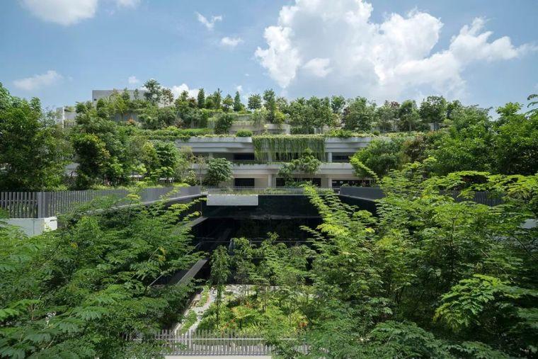 [经典案例]为什么全世界都去新加坡学习垂直绿化?