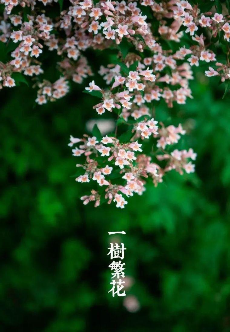 一处小院,一树繁花,简单的日子,是诗