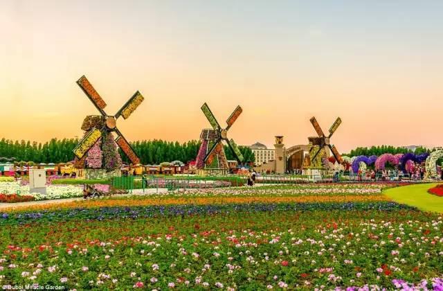 迪拜的花卉展览,全世界规模最大!你肯定没看过!_8