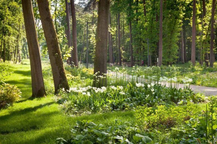 BadLippspringe森林公园