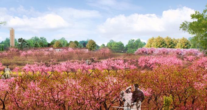 [安徽]生态人文气息流线型山体高差森林公园景观设计方案-桃花林景观效果图