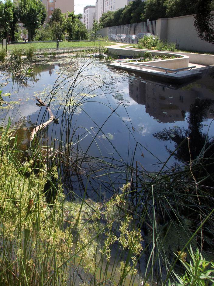 住宅区中的私人花园景观-9