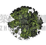 平面彩图树16