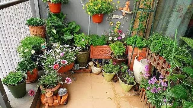 想要这样一个阳台,过小日子,看花开_11