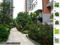 景观设计实战教程 园林景观设计全面教程 植物设计速成