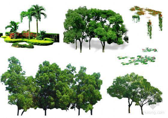 PS后期素材(树木)06