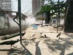 贵州遵义奥特莱斯空中动物园人造雾景观,喷雾景观案例分享