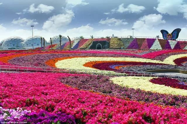 迪拜的花卉展览,全世界规模最大!你肯定没看过!_13