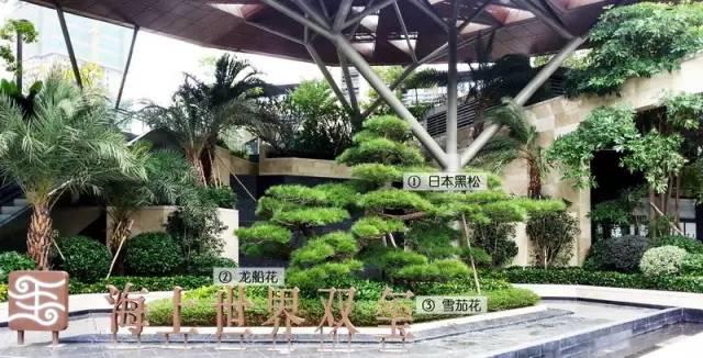 最详细图解:深圳湾三大豪宅景观植物配置!_2