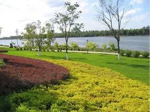 干货 景观地被植物的选择方式_24